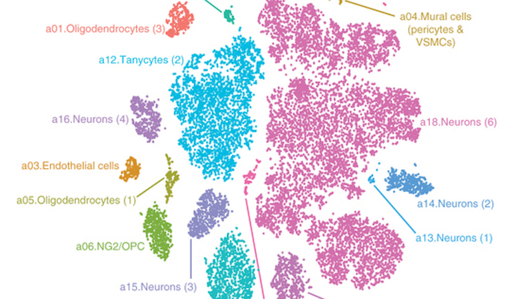 Cell types in region of mouse brain